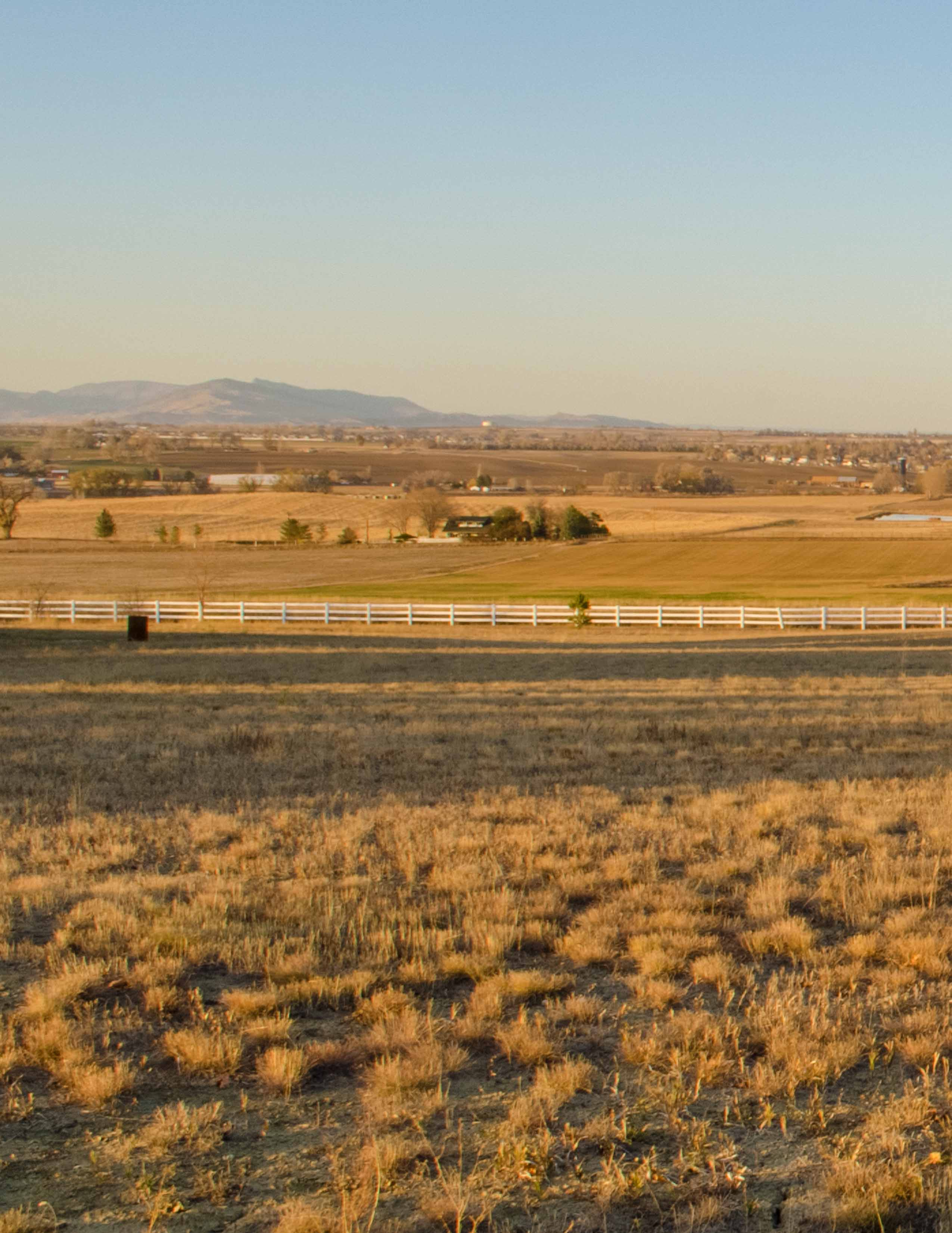 open field at sunset, grass and fences.